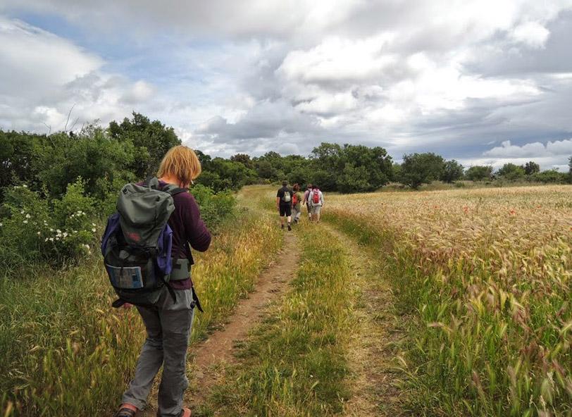 Stage de jeûne et randonnée et cures détox - Chemin dans les blés