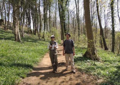 Cassel - Randonnée sous bois