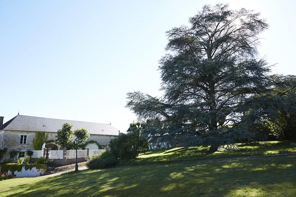 St Privé - La tremellerie maison ciel arbre