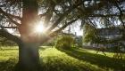 St Privé - Arbre soleil