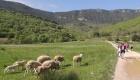 Détox Oleatherm - Randonnée moutons