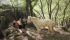 Balade avec les chevaux
